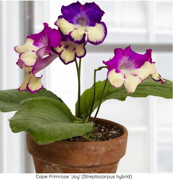 Low Light Houseplants 15 Fabulous Houseplants Perfect For Low Light